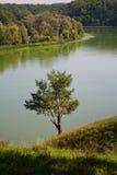 Árvore de pinho só no banco de rio Fotografia de Stock