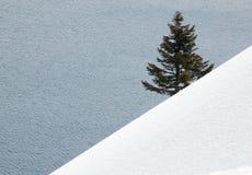 Árvore de pinho solitária Imagem de Stock Royalty Free