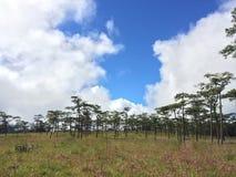 Árvore de pinhos com flor cor-de-rosa foto de stock royalty free