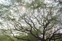 Árvore de ramificação Imagens de Stock Royalty Free