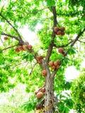 Árvore de rolamento Foto de Stock Royalty Free