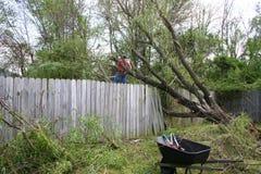 Árvore de salgueiro caída Fotos de Stock