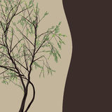 Árvore de salgueiro decorativa do quadro do vetor do projeto Imagem de Stock Royalty Free
