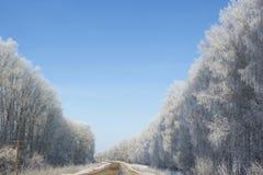 Árvore de salgueiro no close up da geada no fundo do céu azul Imagem de Stock