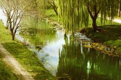 Árvore de salgueiro pela água Fotos de Stock