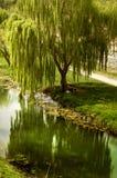 Árvore de salgueiro pela água Imagem de Stock