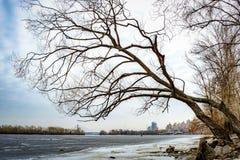 Árvore de salgueiro sobre o rio congelado de Dniper fotografia de stock