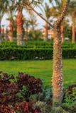 árvore de seda de floss Fotografia de Stock
