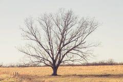 Árvore de solo no campo Fotos de Stock