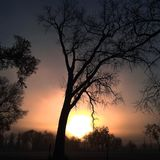 A árvore de sonho Imagem de Stock Royalty Free