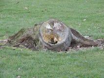 Árvore de sorriso Fotografia de Stock Royalty Free