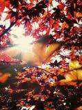 Árvore de Sun Foto de Stock Royalty Free