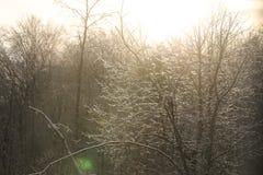 Árvore de Sun fotografia de stock royalty free