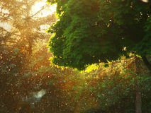 Árvore de Suny Imagem de Stock Royalty Free