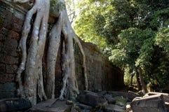 Árvore de Ta Prohm Imagem de Stock