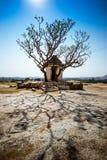 Árvore de templo Fotos de Stock Royalty Free