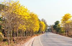 Árvore de trombeta amarela Fotos de Stock Royalty Free