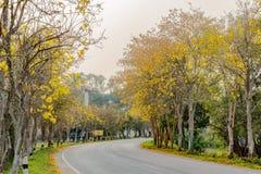 A árvore de trombeta amarela Imagens de Stock