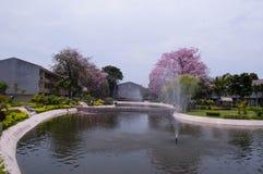 Árvore de trombeta cor-de-rosa fotos de stock royalty free