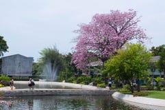 Árvore de trombeta cor-de-rosa imagem de stock