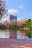 Árvore de trombeta cor-de-rosa em um parque Foto de Stock Royalty Free