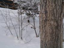 Árvore de um quarto Fotografia de Stock