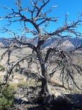 Árvore de Utá de vida fotos de stock royalty free