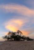 Árvore de vida, árvore velha do mesquite, Barém, HDR Imagens de Stock
