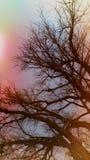 A árvore de vida Foto de Stock Royalty Free