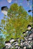 Árvore de vida imagens de stock