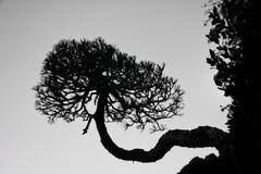 A árvore de vida cresce lateralmente imagem de stock