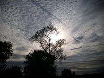 Árvore de vida Por do sol Imagens de Stock