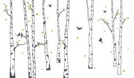 Árvore de vidoeiro com a silhueta de queda verde das folhas e dos pássaros ilustração do vetor