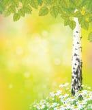 Árvore de vidoeiro do vetor e camomilas brancas Fotos de Stock Royalty Free
