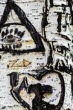 Árvore de vidoeiro dos grafittis fotos de stock royalty free