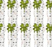 Árvore de vidoeiro Teste padrão sem emenda Vetor elemento para papéis de parede, fundo do fabricDesign da site, convite da festa  Fotos de Stock Royalty Free