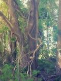 Árvore de Viney imagens de stock