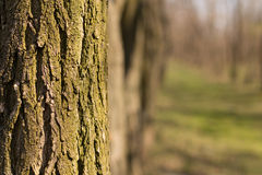 Árvore decíduo com um fundo borrado Imagem de Stock Royalty Free