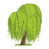 Árvore decíduo em quatro estações - mola, verão, outono, inverno Natureza e ecologia Ilustração verde da árvore ilustração royalty free