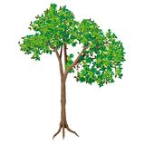 Árvore Deciduous Imagem de Stock Royalty Free