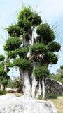 Árvore decorada no parque nacional Fotografia de Stock