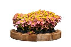 Árvore decorativa Fotografia de Stock Royalty Free