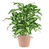 Árvore decorativa da planta no potenciômetro Imagem de Stock