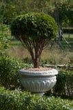 Árvore decorativa em um vaso fotografia de stock royalty free