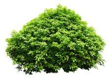 Árvore decorativa Imagens de Stock