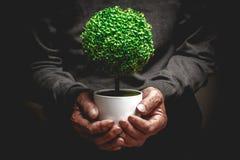Árvore decorativa nas mãos velhas foto de stock
