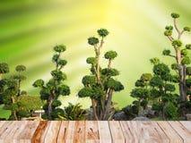 Árvore decorativa verde no jardim Fotografia de Stock Royalty Free