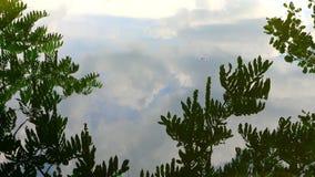 A árvore deixa a reflexão na água do lago video estoque