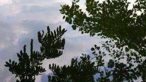 A árvore deixa a reflexão na água do lago vídeos de arquivo
