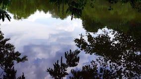 A árvore deixa a reflexão na água do lago filme